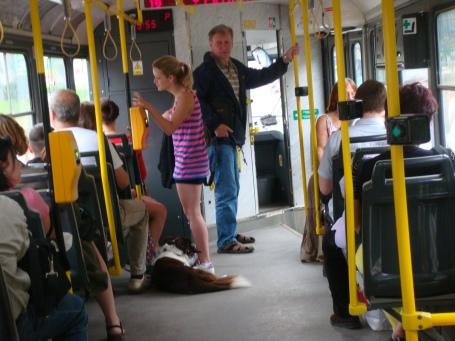 O cachorro é mais um passageiro no tram