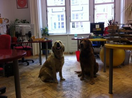 Cães bem à vontade no escritório da imobiliária Happy House Rentals